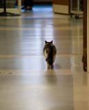 OsCAR WALKING THE NURSING HOME CORRIDOR.