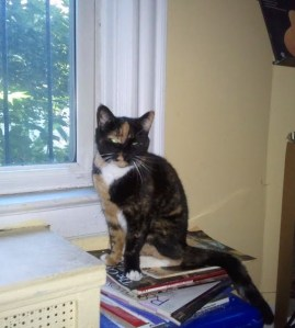 Zora, my tortoise shell cat, sitting on a stack of books near a window.