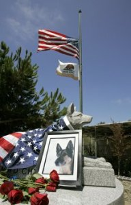 Flags, roses, photo & statue of war dog