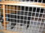 black cat in shelter cage
