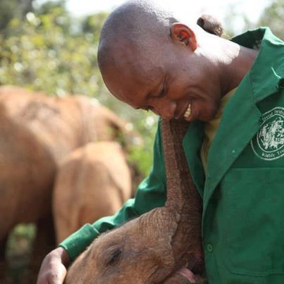 Baby Elephant and African Handler