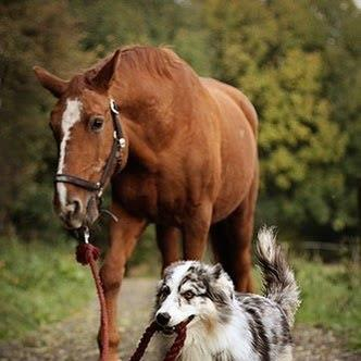 Dog taking Horse for a Walk