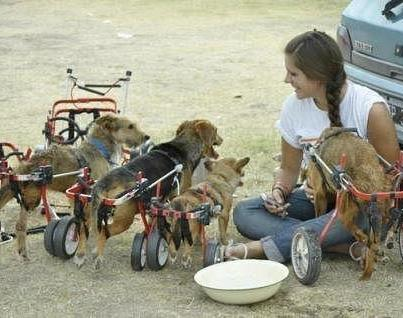 Handicapped Dogs