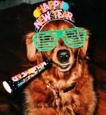 Happy New Year Party Dog