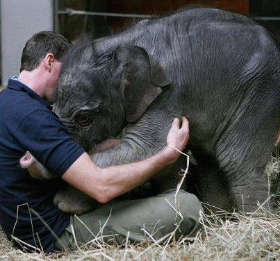 Man and Baby Elephant Embrace