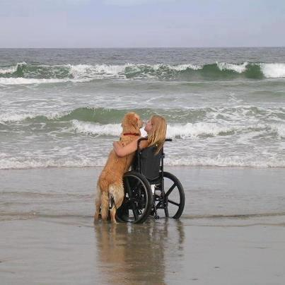 Therapy Dog at Beach