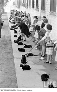 Black Cat Audition3