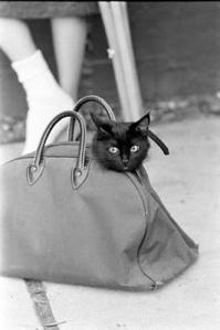 Black Cat Audition8