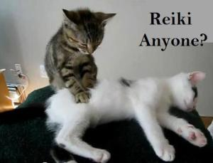 Cat offering reiki