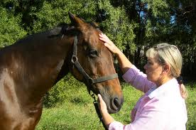 Horse receiving Reiki