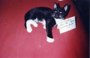 Pushkin the Kitten