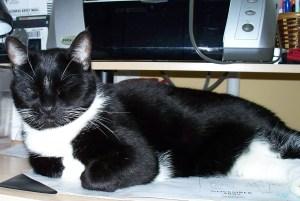 My cat, Pushkin.